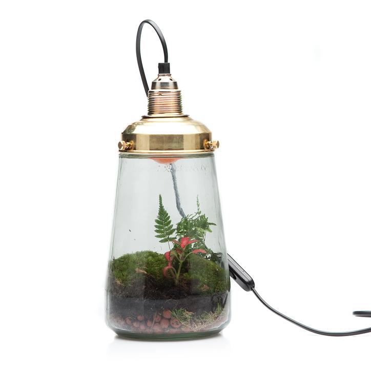 Plant In Glazen Pot.Een Plant En Een Lamp Mpcnc